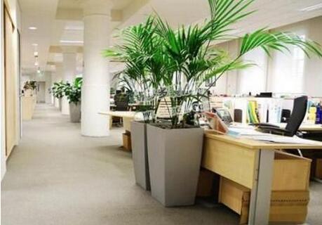 搭配实木办公桌的办公室要多种植物